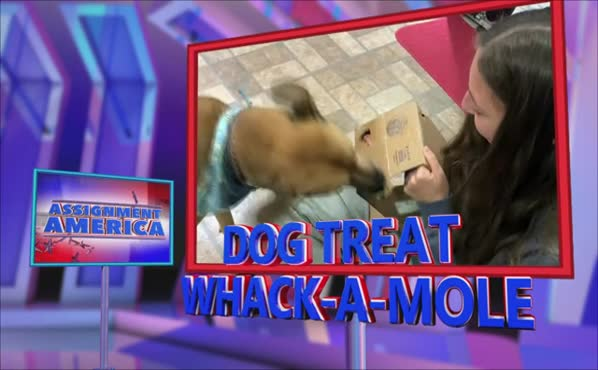 Assignment America: Dog Treat Whack-A-Mole