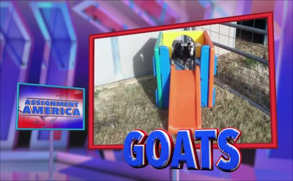 Assignment America: Goats