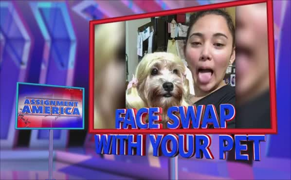 Assignment America: Pet Face Swap