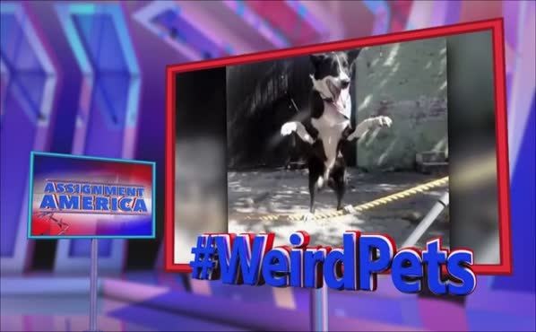 Assignment America: #WeirdPets
